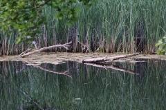 Pater pond
