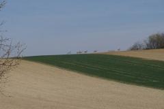 Gallbrunn landscape with deer