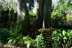 Ceiba & and Figue-tree, married for 310 years