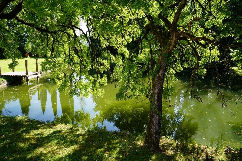 pond at the backyard